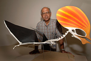 Texas Tech research Sankar Chatterjee says Tapejara could sail across the surface of the ocean like modern windsurfers.
