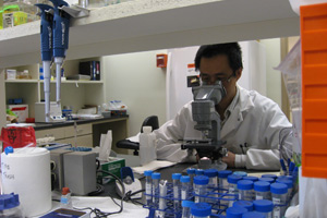 Since 2000, Zhang has devoted himself to studying Leishmania and rendering the deadly organism harmless.