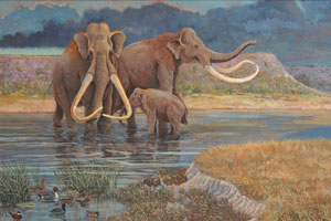 Columbian mammoth (Mammuthus columbi) was even larger than the more familiar Woolly Mammoth, and went extinct approximately 10,000 years ago.