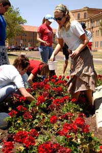Many of the Greek organizations participate in on campus activities like Arbor Day.