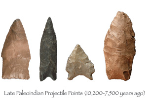 Late Paleoindians traveled shorter distances than the Folsom people, so there were more variations in projectile point styles during this period.