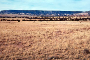 According to the United States Department of Agriculture, Texas has some 94 million acres of rangeland currently under drought conditions.