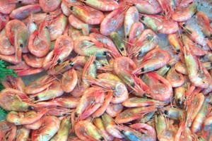 The shrimp used in the study were imported into the United States and purchased from grocery store shelves in New York, Washington, D.C., Atlanta and Los Angeles.