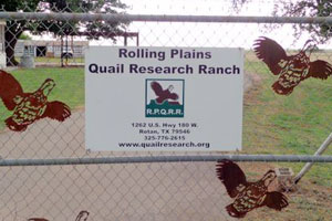 Rolling Plains Quail Research Ranch.