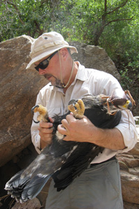 Boal with a just captured young Golden Eagle.