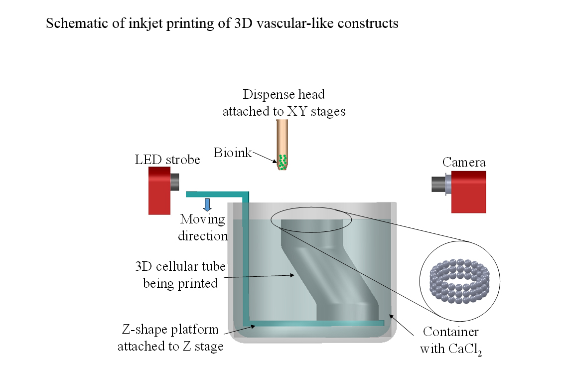 Schematic of inkjet printing of 3D vascular-like constructs