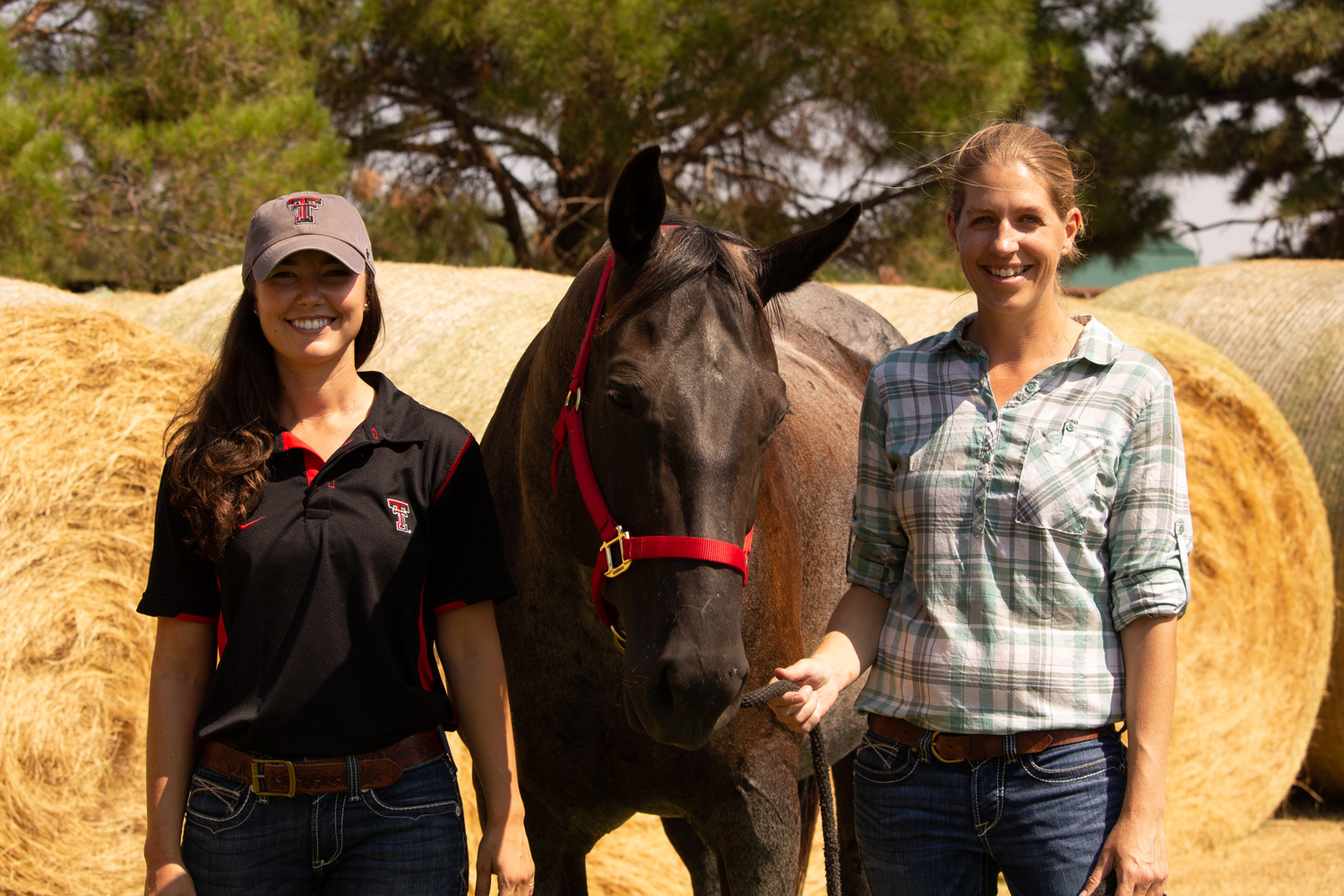 Equine-Assisted Counseling & Wellness Lab