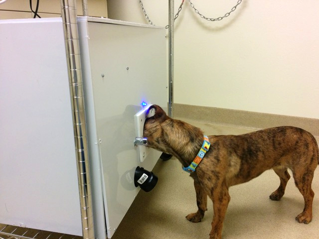 Dog being tested to detect explosive chemical mixture