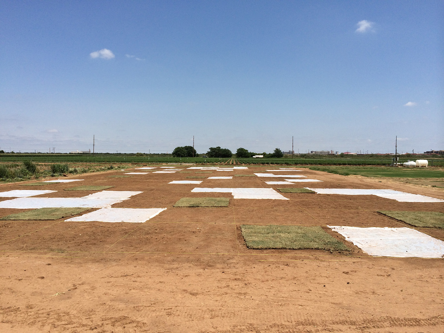 Turfgrass planted at Quaker Avenue Research Farm
